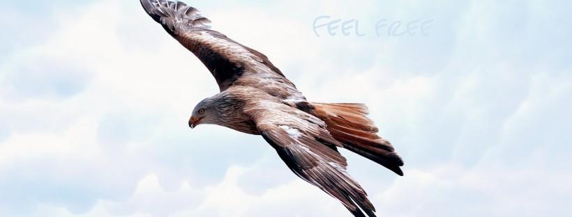 Adler freedom-589576_1280